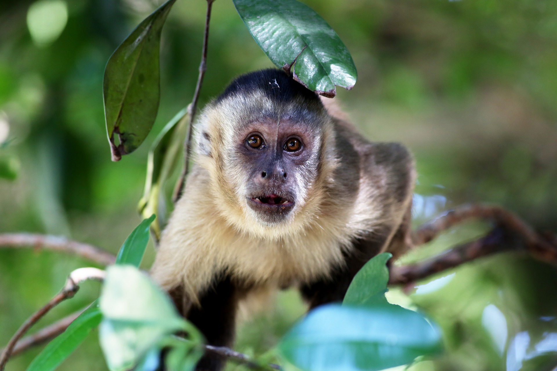 Types of Monkeys - costa rica wildlife