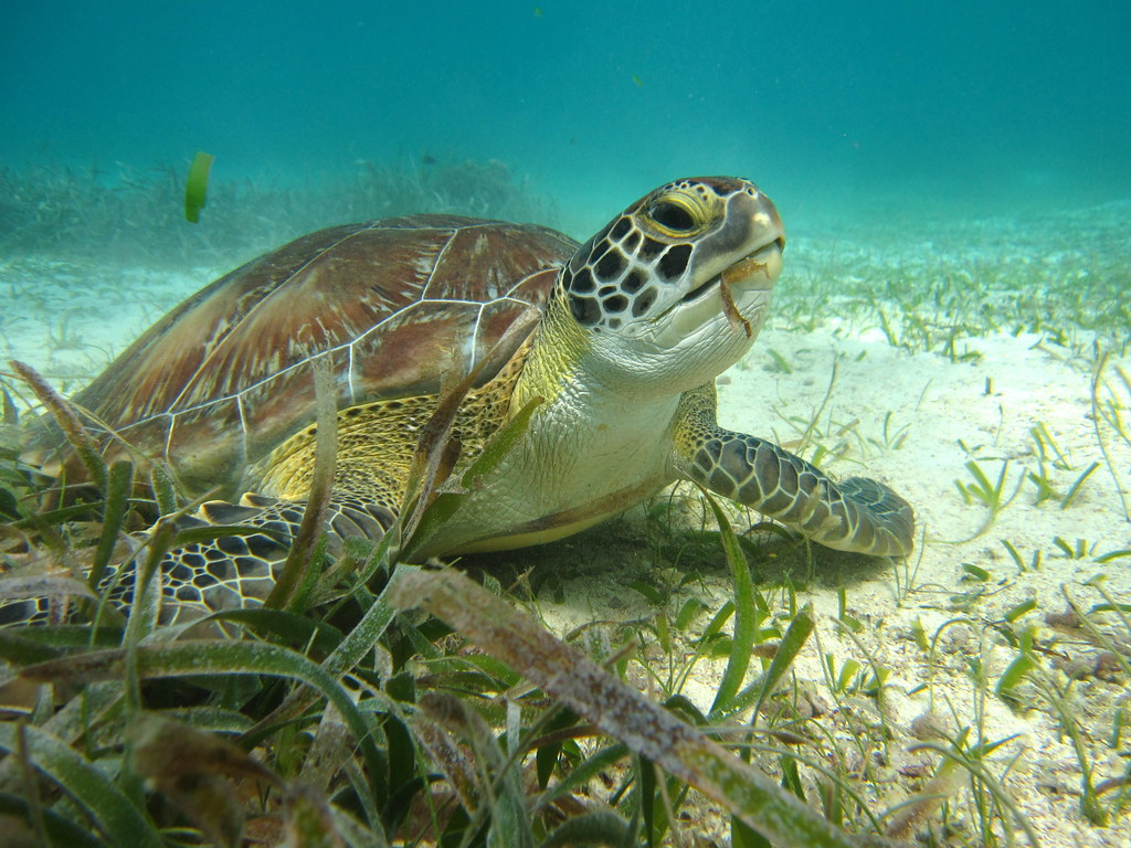 Costa Rica Wildlife - 4 Endangered Sea Turtle Species