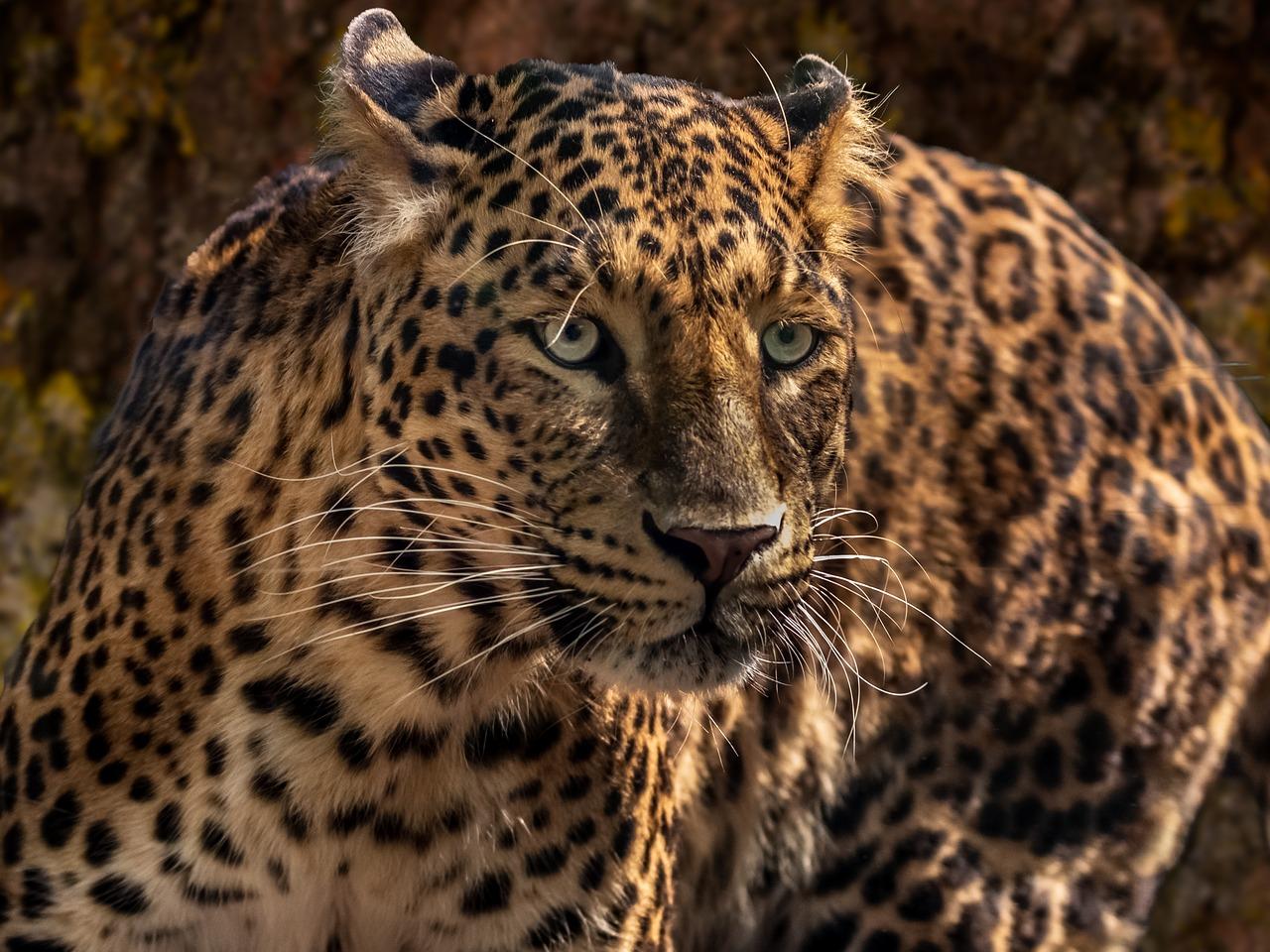 Facts About Jaguars