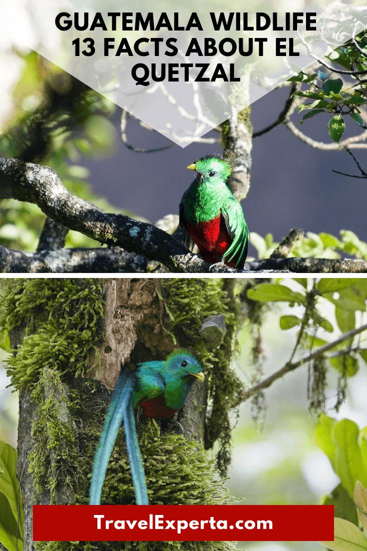 Guatemala wildlife - Facts about el Quetzal Bird