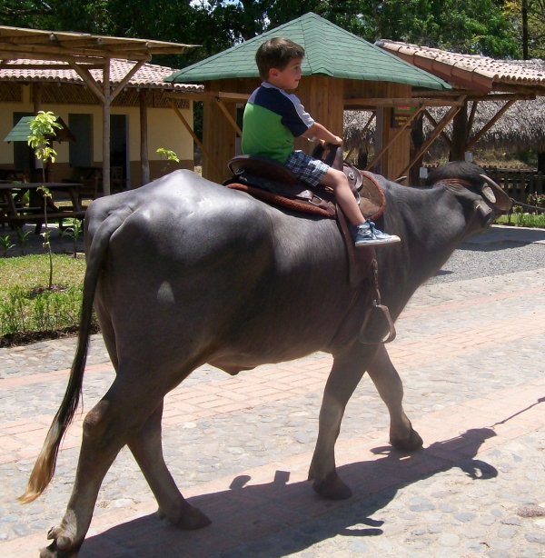 A list of Animal Parks and Costa Rica Animal Rescue Centers