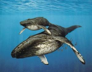 wildlife-costa-rica-humpback-whale