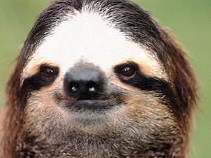wildlife-costa-rica-sloth