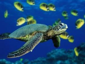 wildlife-costa-rica-sea-turtle