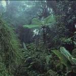 monteverde-cloud-forest-reserve-costa-ria