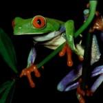 monteverde-frog-pond-costa-rica