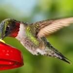 monteverde-hummingbird-gallery-costa-rica