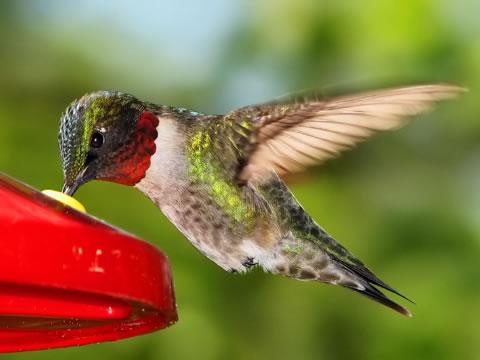 hummingbird in monteverde cloud forest costa rica