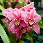 monteverde-orchid-garden-costa-rica