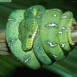 monteverde-serpentariun-costa-rica