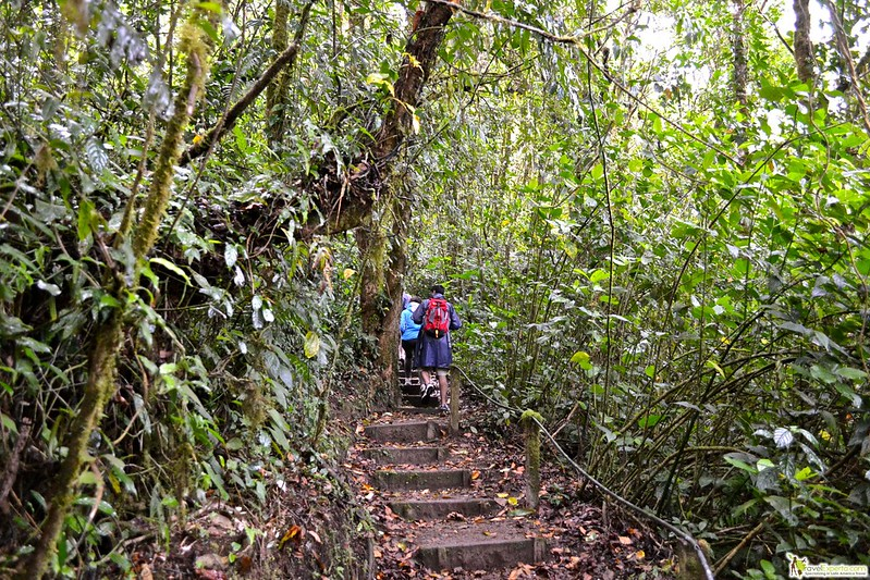 hiking tour in monteverde cloud forest reserve