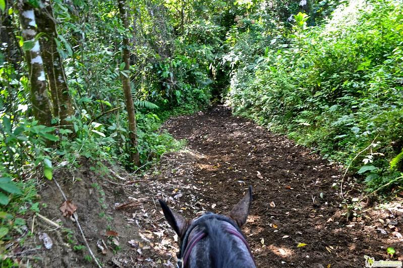 horseback riding tour monteverde costa rica