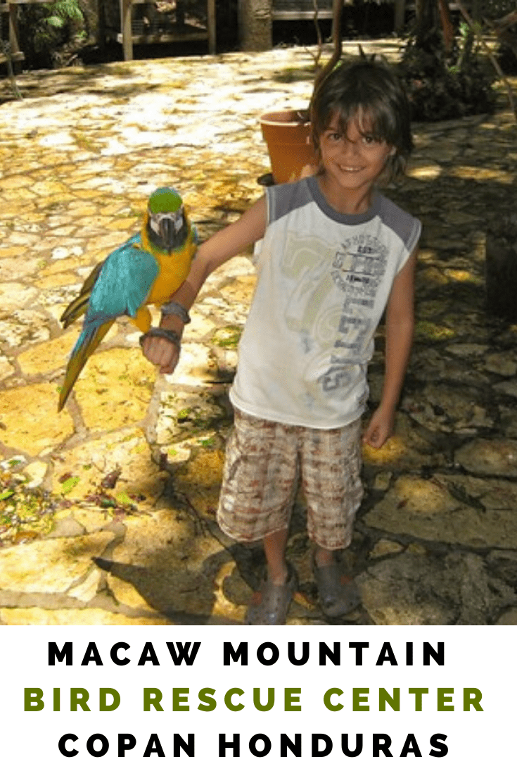 Macaw Mountain - A Bird Rescue Center in Honduras