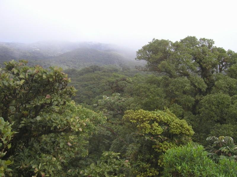 A Traveler's Guide On Where To Go in Monteverde, Costa Rica