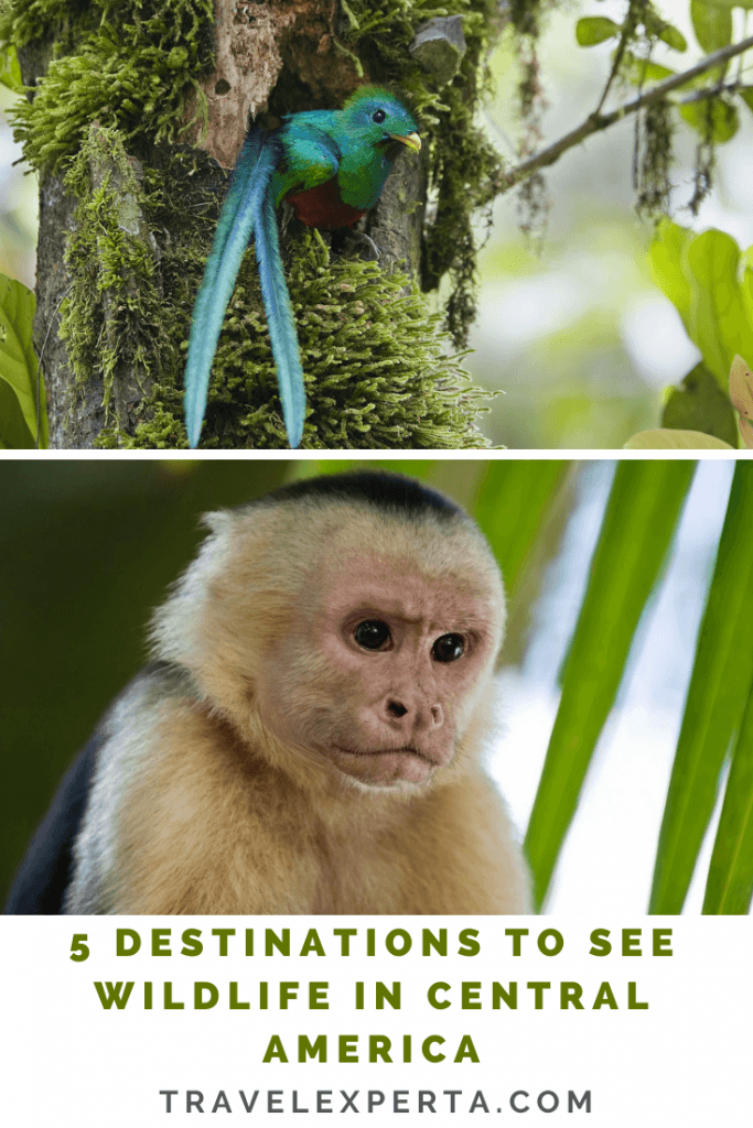 5 Destinations to See Wildlife in Central America