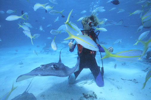 Diving in Central America – A Guide to 8 of the Best Dive Sites