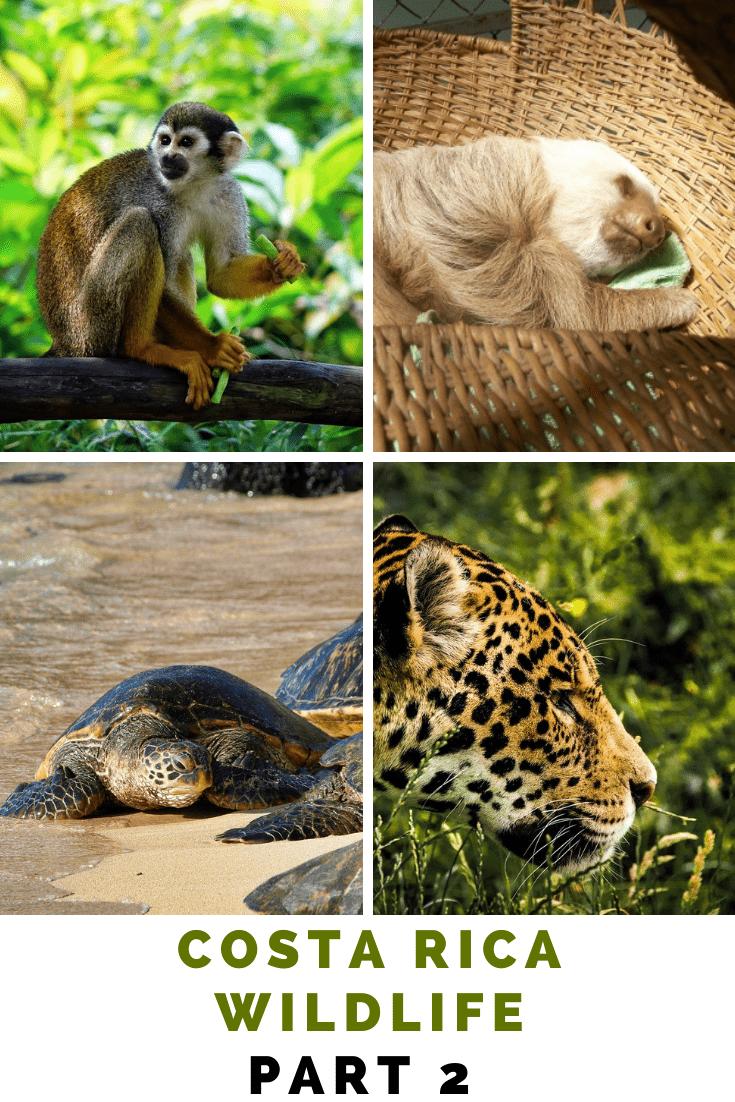 12 animal species of Costa Rica Wildlife
