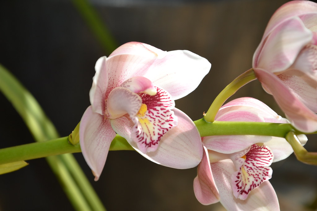 Orchid garden and tour in monteverde costa rica