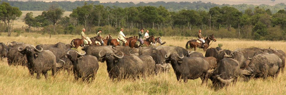 Kenya-Riding-with-buffalo-Offbeat-Riding-Safari