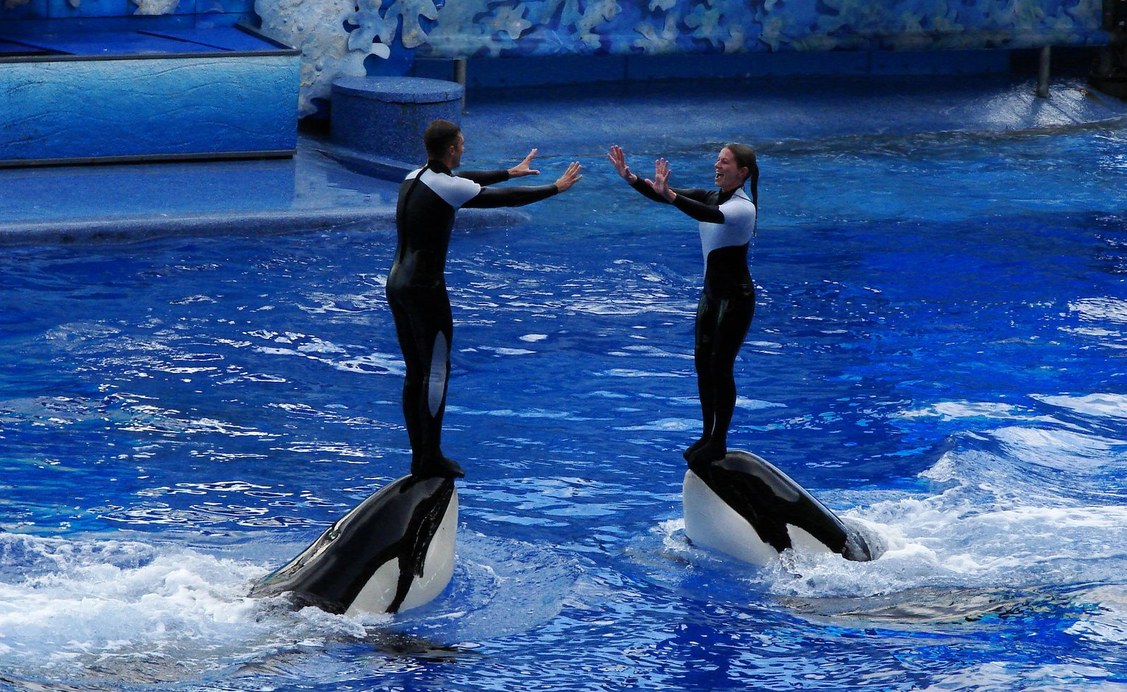 SeaWorld Orlando - The Most Interesting Ocean Park in Florida