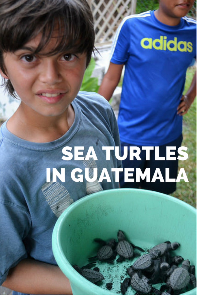 All you need to know about sea turtles and rescue centers in Guatemala