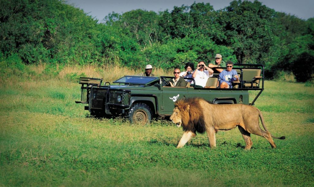 What to expect on an African safari