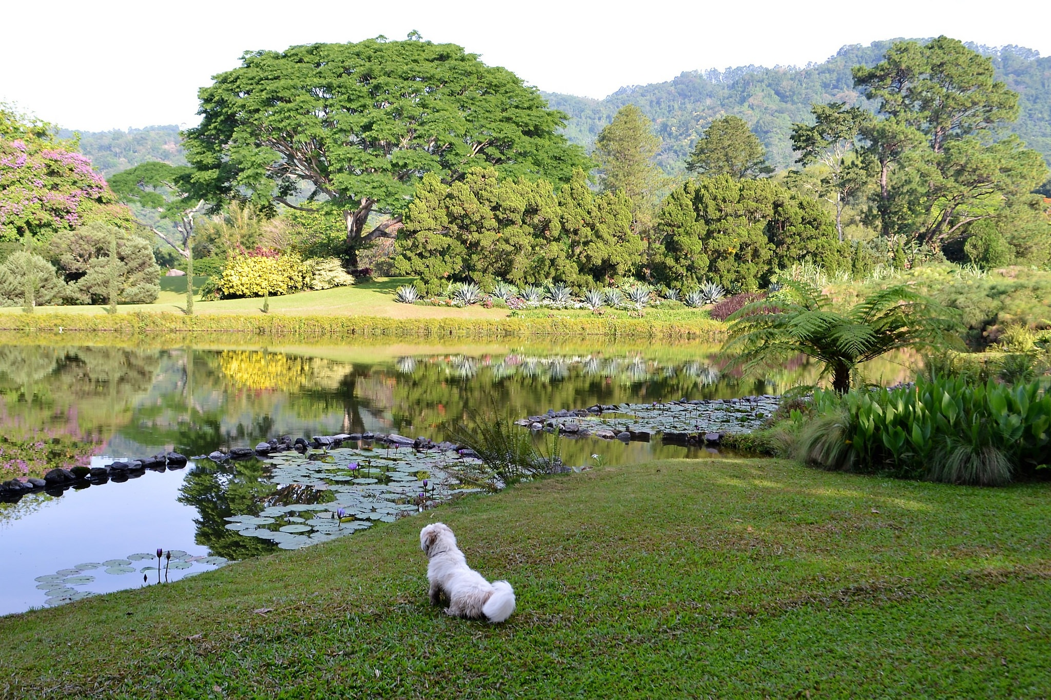dog friendly travel in guatemala