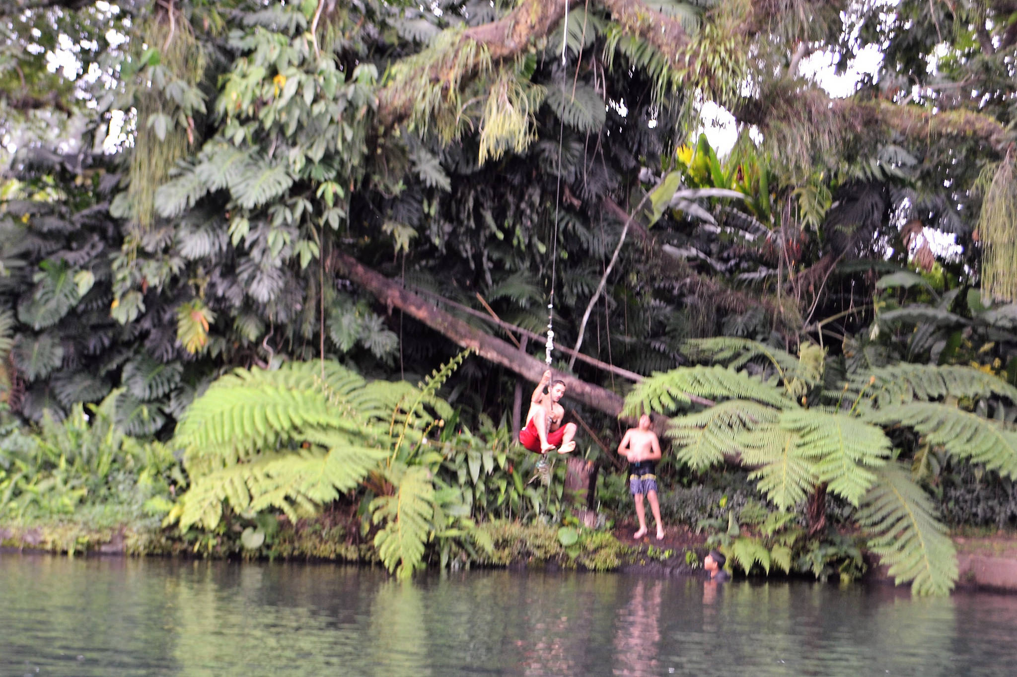tarzan swing, nature and outdoors adventures