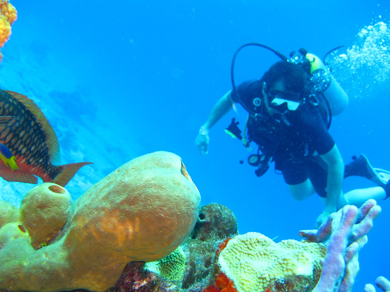 Top 7 Best Places to Scuba Dive in the US