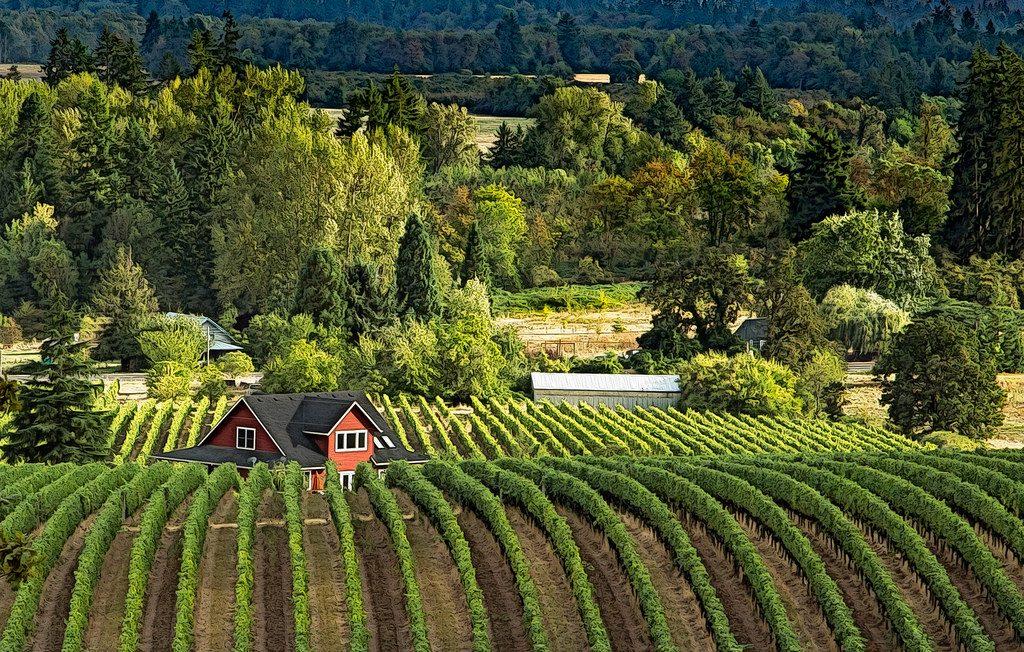 Explore Oregon - winery