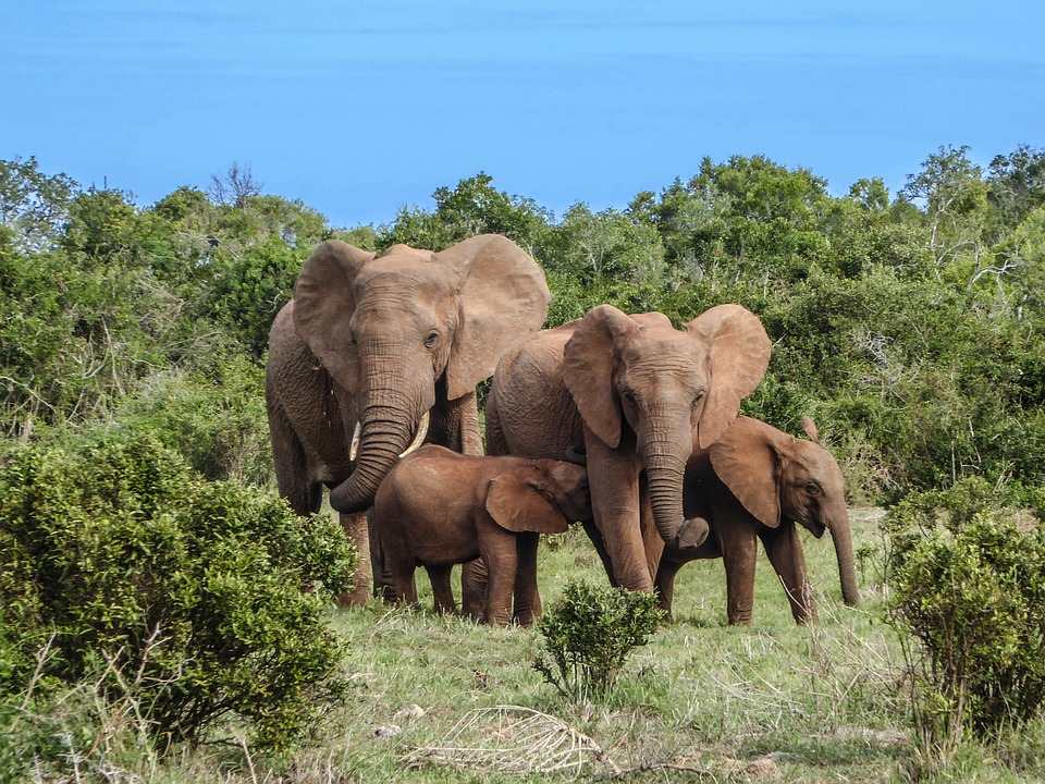 Top Tips for Taking Your Children on an African SafariTravel
