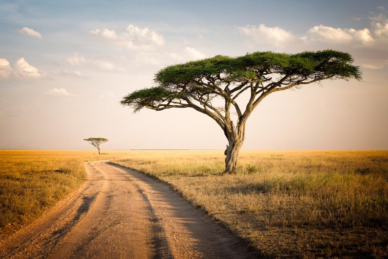 Reasons to Visit Tanzania