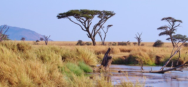 Traveling in Arusha Tanzania