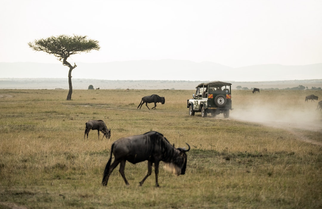Don't Go on a Safari Without These 10 Animal Spotting Tips