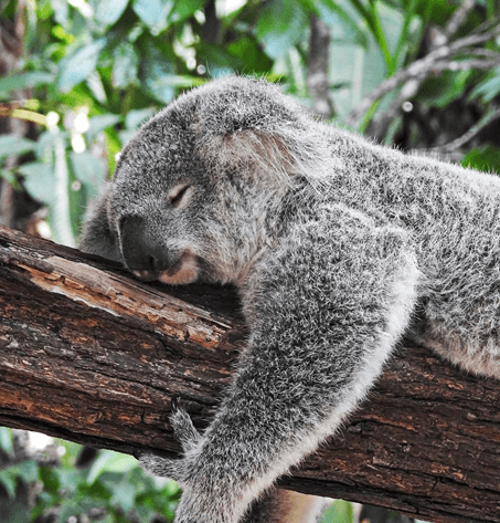 What I Learned From Visiting Australia