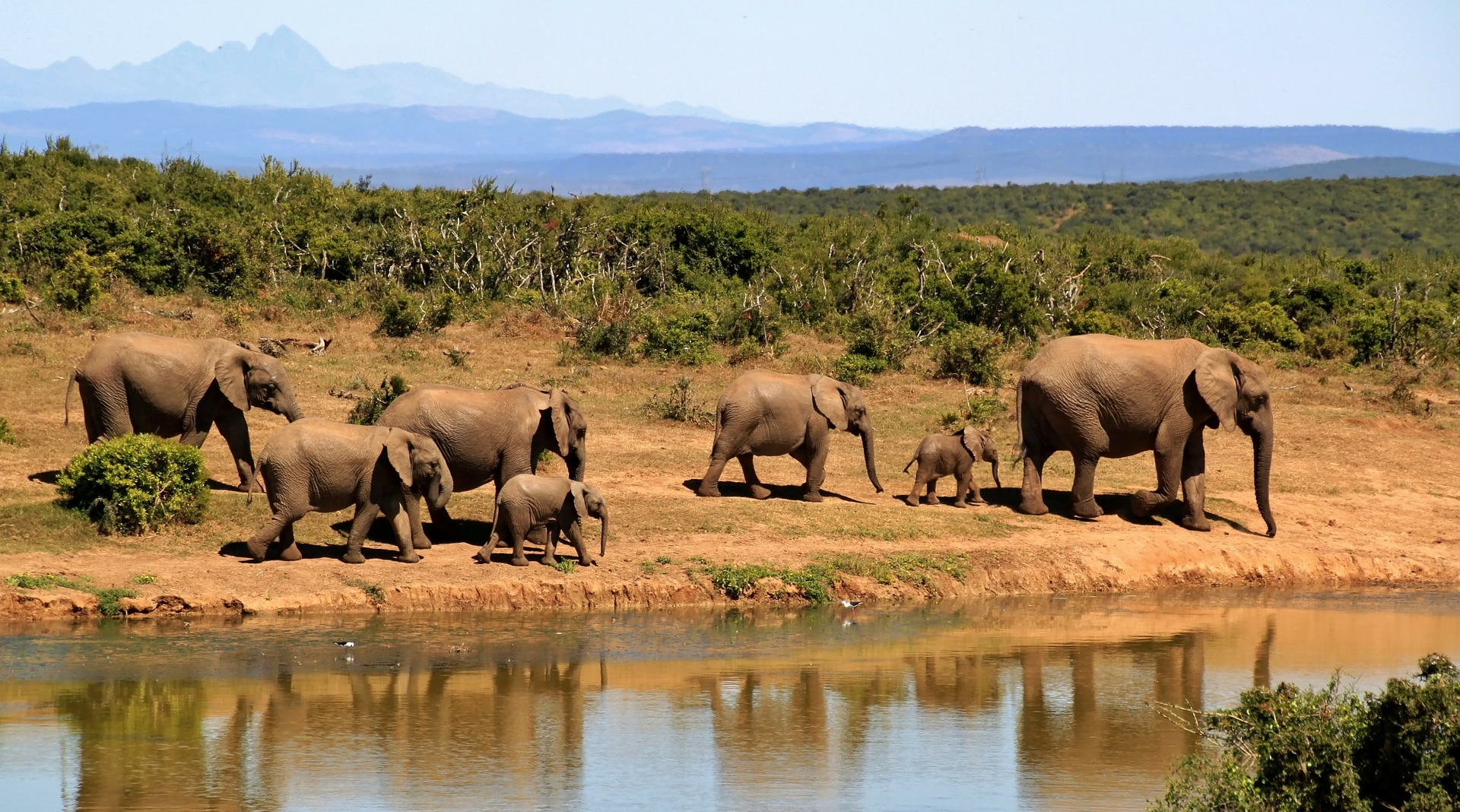 5 Best Countries to Visit for an African Safari