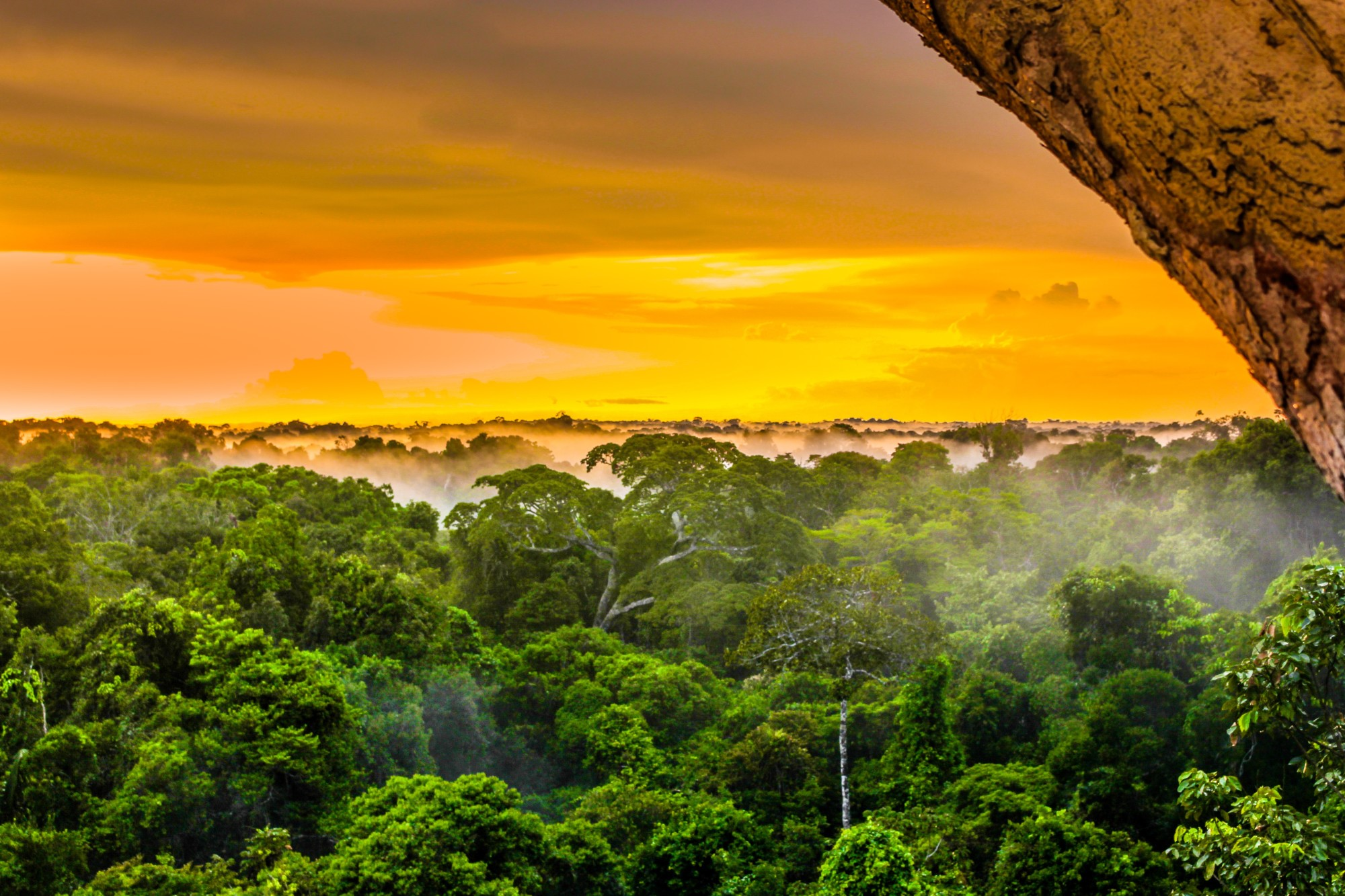 Exploring the Jungle: 11 Things To Know Goin on a Trip to the Amazon