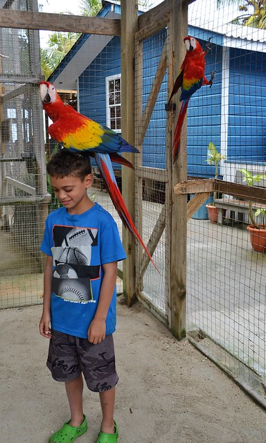 Honduras travel - Macaws in Roatan