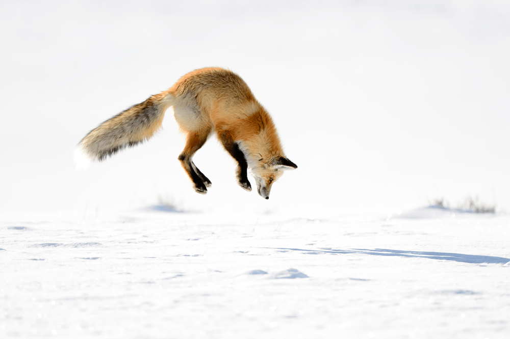 7 Top Tips for Amazing Wildlife Photography