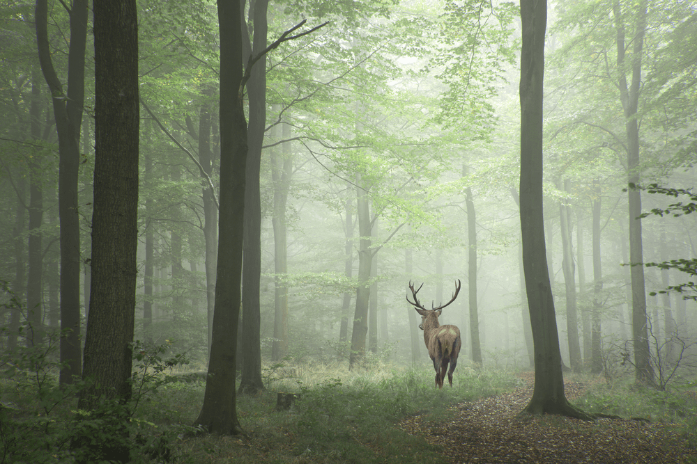 Top Tips for Wildlife Photography