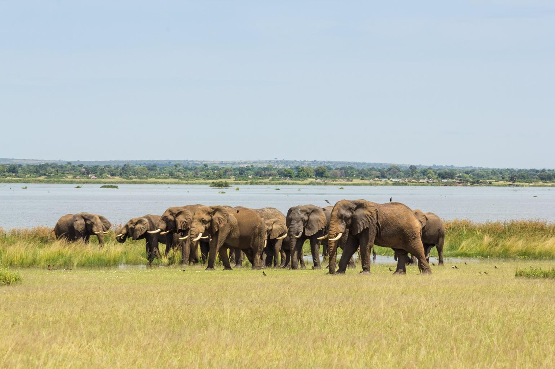 Guide to Exploring Murchison Falls National Park of Uganda