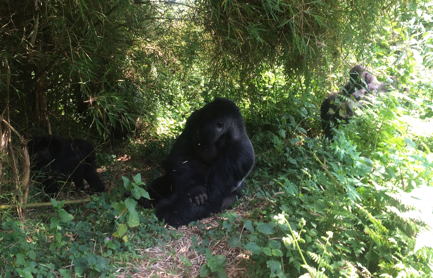 Gorilla Trekking in Rwanda - Volcanoes National Park