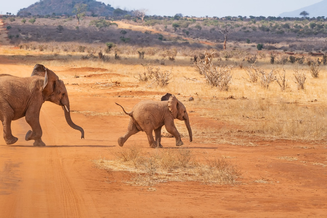 Family Safari Destinations in Africa - South africa