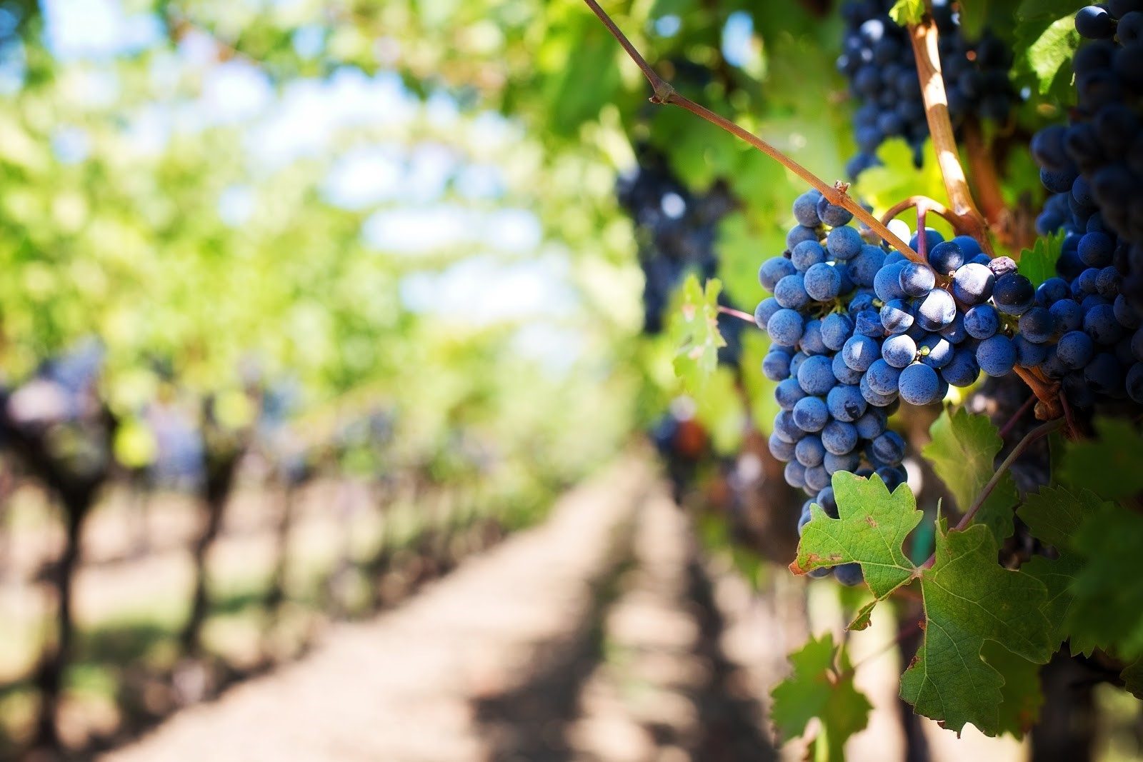 Three Days in Napa Valley: A First Timer's Itinerary
