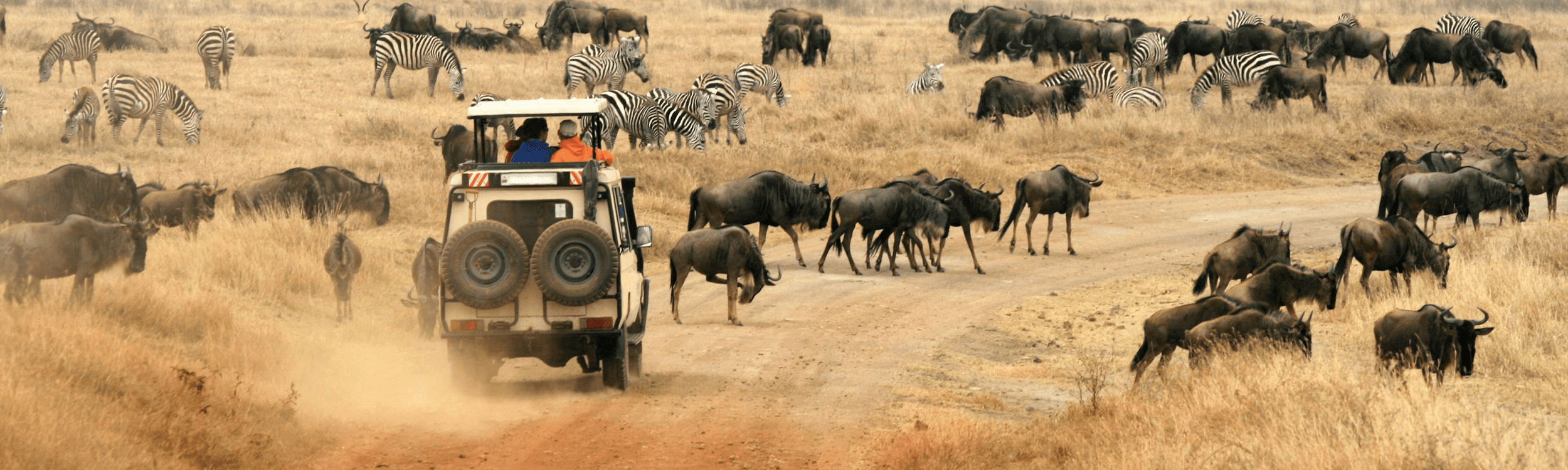 Amazing Luxury Tours in India You Must Experience in 2020
