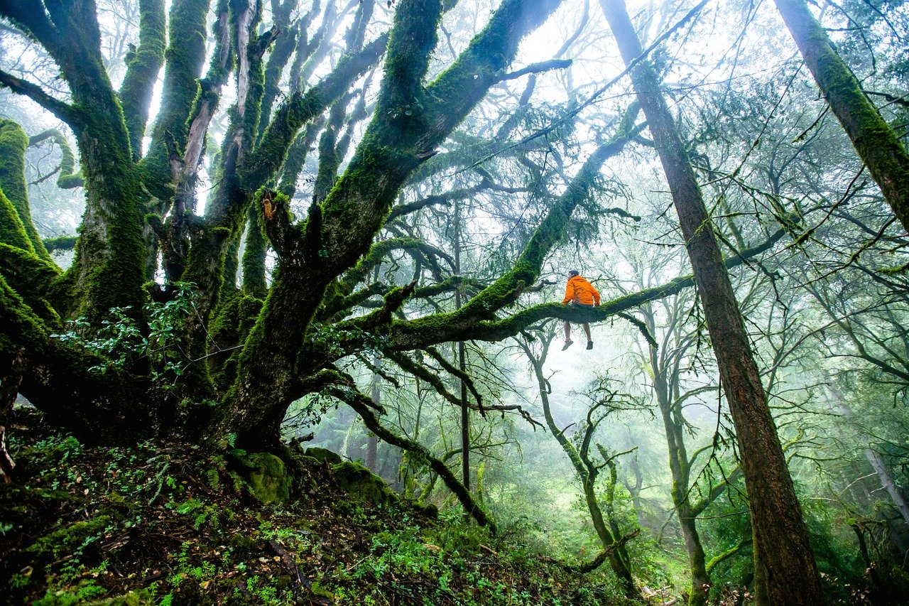 The Darien Gap – The World's Most Dangerous Jungle
