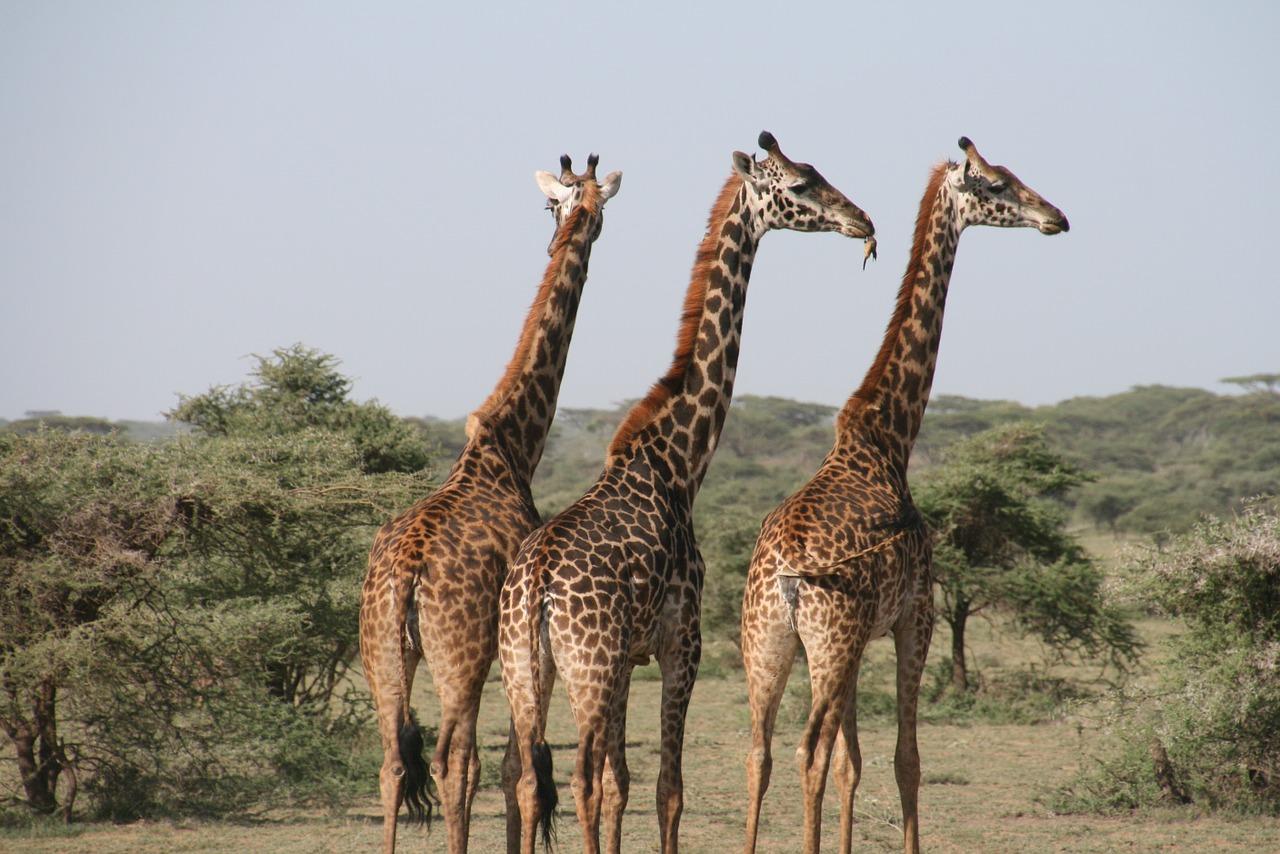 Family Safari Destinations in Africa - Tanzania