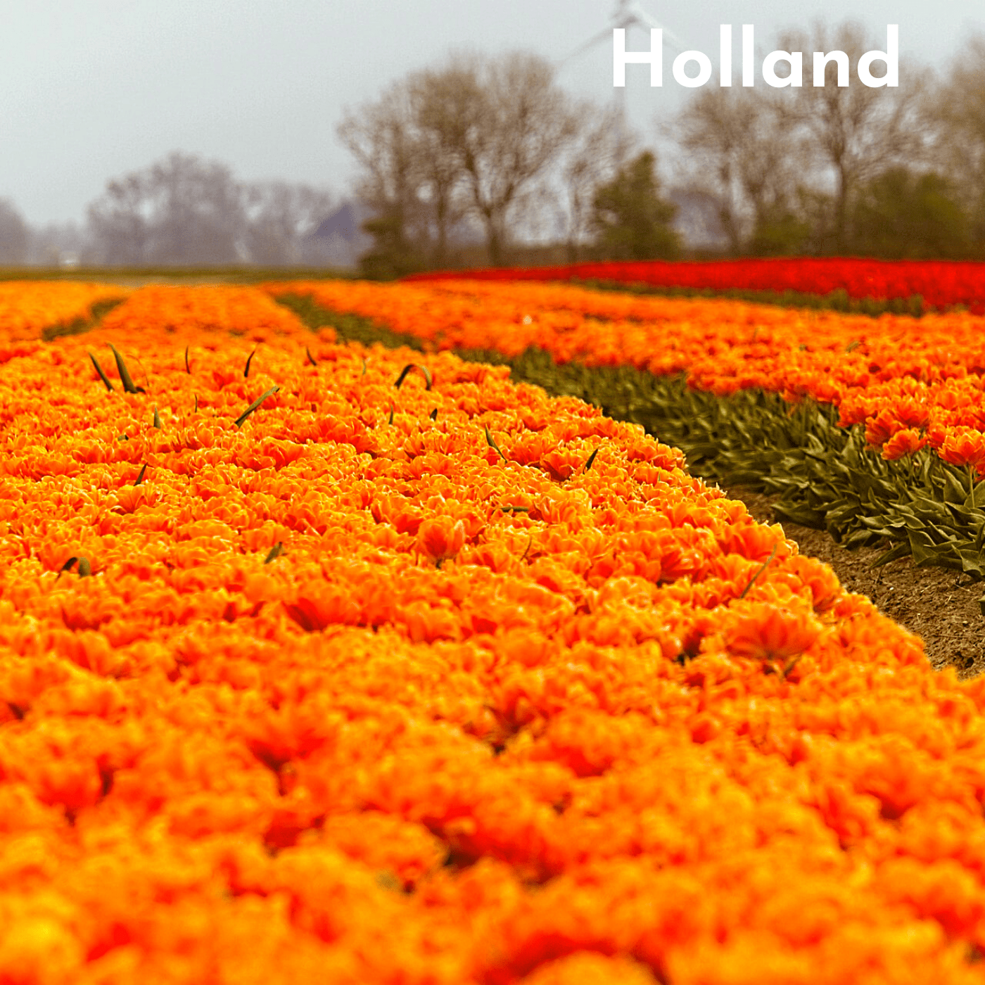 Holland Bucket List