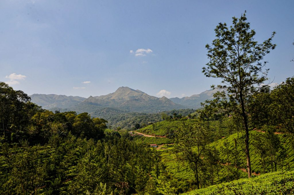 Top Places to Stay in Wayanad