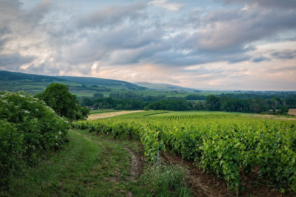 Explore The Most Famous Wine Regions On A French Canal Barge Tour